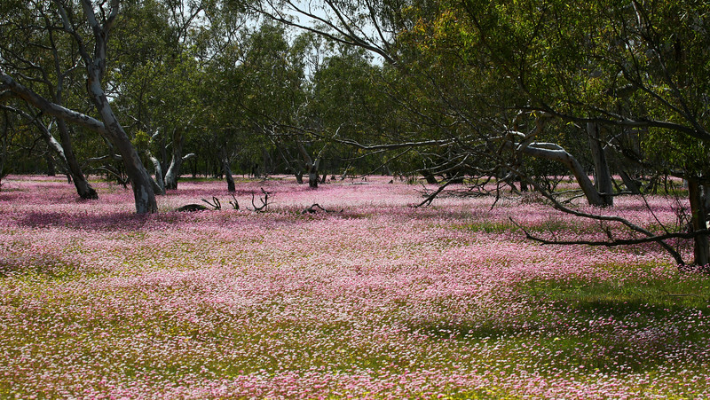 Wildflowers in Australia