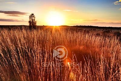 Golden Sunrise in the Grassy Outback