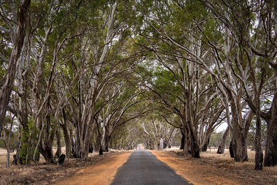 Tree Lined Road, Australia