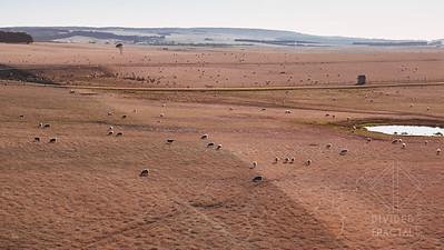 Australia, Melbourne, Great Ocean Road, Sheep