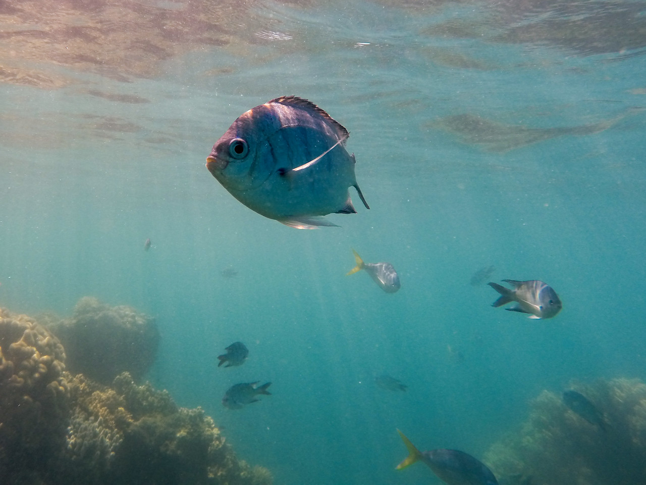 Snorkeling at the Whitsunday Islands