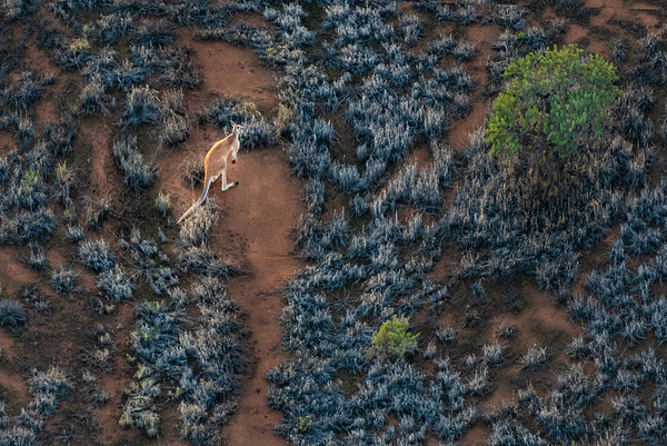 Roo from Above