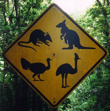 2000_Cairns_Jungle_Sign