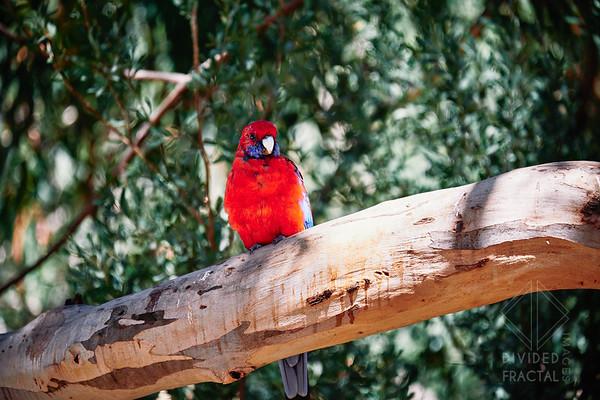 Australia, Melbourne, Great Ocean Road, Bird