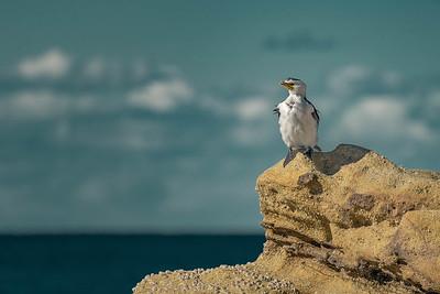 Beach Breeze Bird