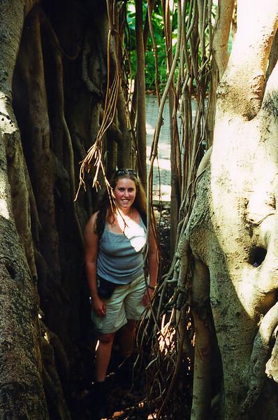 2000_Brisbane_FigTree