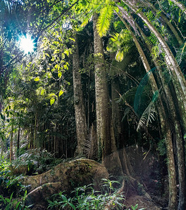 Rays & Roots (Pano Portrait)