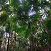 Rainforest of Palms