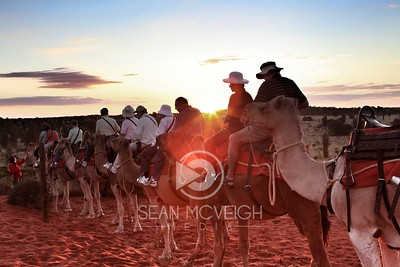 Camels, the perfect tour guides