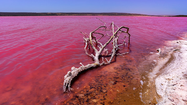 Pink Lake (Hutt Lagoon), Gregory, WA