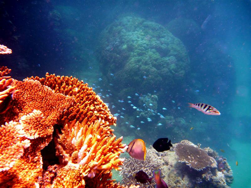 Looking down: the sun hits the brighter stuff; and off the coral cliff, the coral deeper down looks more blue.