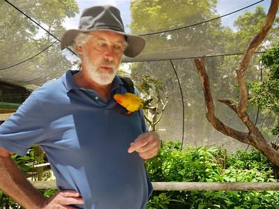 Australia: Rainforest near Cairns
