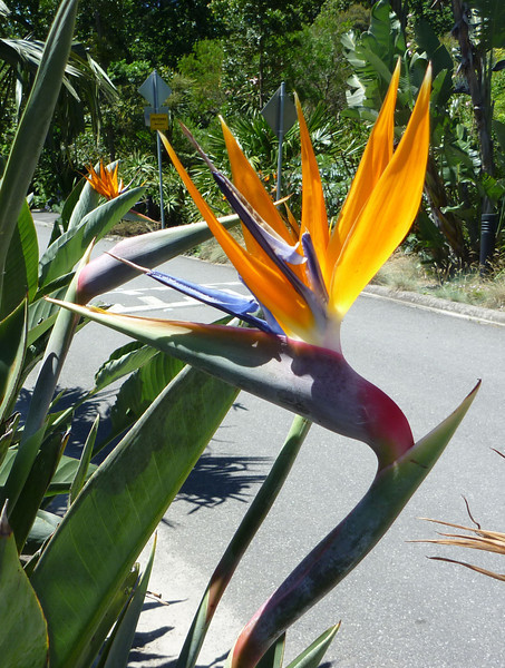 This flower looks like a tropical bird. The shot isn't great, but it gives that impression at least. This was the first cool plant we came across at the BG. Marco and Alex got out their cameras too, and from that point on we were a band of three caffeinated photo-taking tourists.