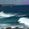 Admirals Arch - Kangaroo Island - Pacific Gull- Larus pacificus
