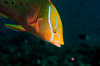 Fish_101201f