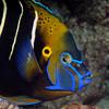 Fish_101206b