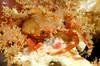 Crab_101129