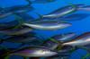 Fish_101210a