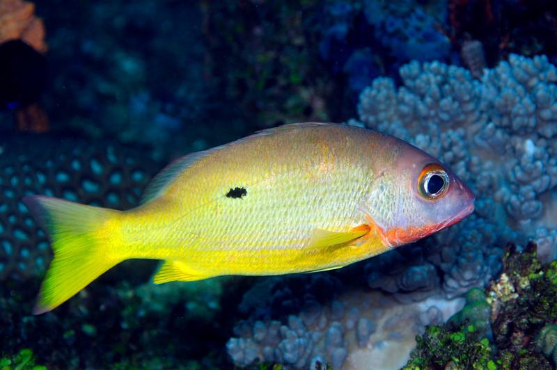 Fish2_101207b
