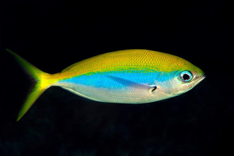 Fish_101207a