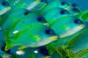 Fish_101201b