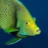 Fish_101206