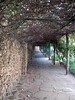 Path, shaded by bougainvillea vines, to Mapango Restaurant.<br /> Aquarius Beach Resort, Watamu, Kenya