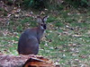Kangaroo, far off.<br /> Janolan Caves, Australia.