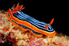 Chromodoris elizabethina<br /> Watamu, Kenya, Africa<br /> ID thanks to Nathalie Yonow