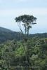 Cairns - Kuranda Skyrail 3 - View of Rainforest