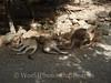 Cairns - Zoo - Kangaroo 1