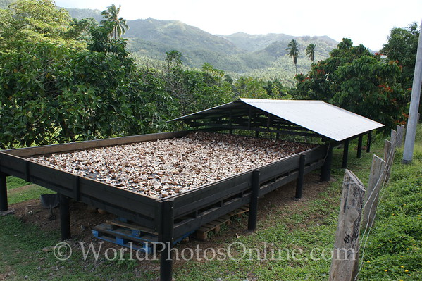 Marquesas - Nuku Hiva - Coconut Copra Drying Table