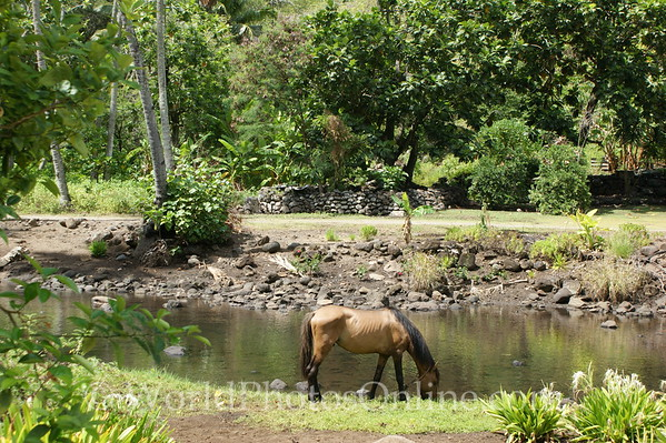 Marquesas - Nuku Hiva - Hooumi Bay - Archeological Site