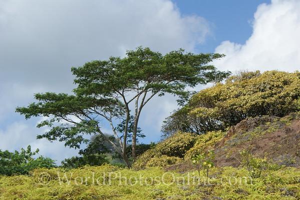 Marquesas - Nuku Hiva - Taipivai - View of the Mountains around Taipivai 2