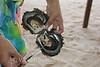 Taha'a - Black Pearl Oyster