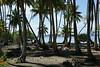 Taha'a - Coconut Palms