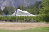 Central Otago - Netting Vines at Peregrine Winery S