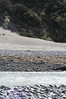 South Island - Waumakariri River - Deer Print Cove 2 S