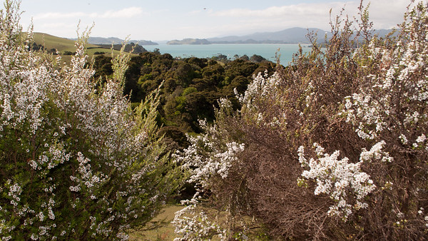 Elspeth to Auckland 56 (view of McGregor Bay)