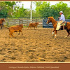 Cutting at Mareeba Rodeo, Mareeba Showgrounds, Atherton Tableland, North Queensland, Australia. <br /> <br /> Photographed July 2010 - © Lesley Bray Photography