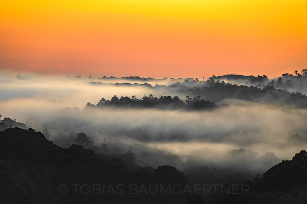 Foggy Sunrise Atherton Tablelands