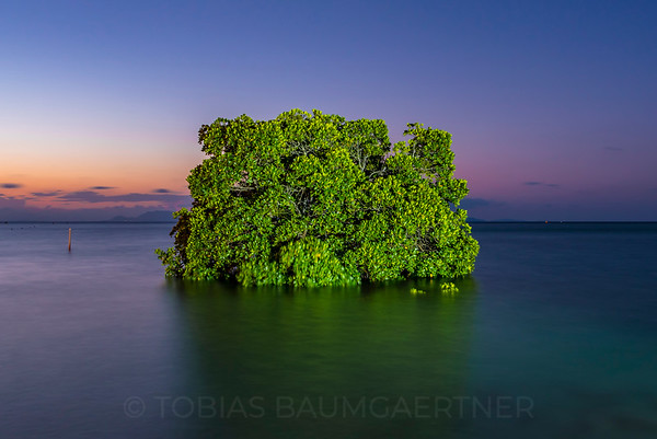 Mangrove and Sunset