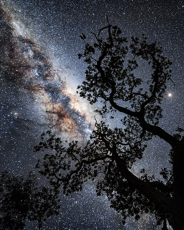 Nightsky Tree Silhouette