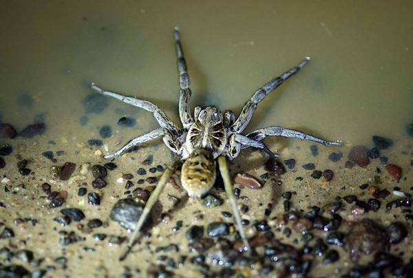 Random Spiders