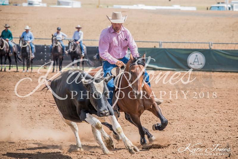 ASHN Stallions-0003