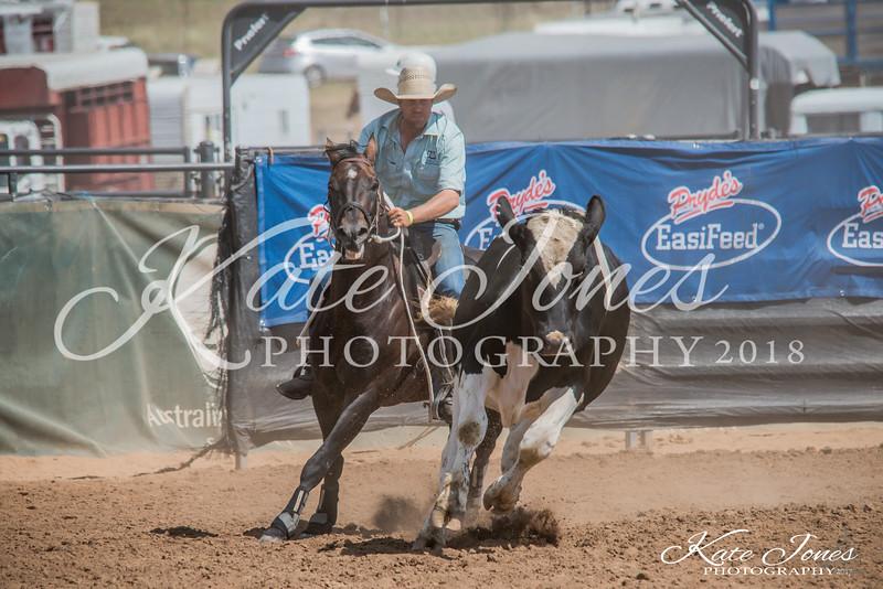 ASHN Stallions-0059