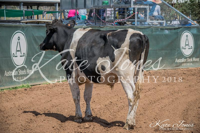 ASHN Stallions-0061