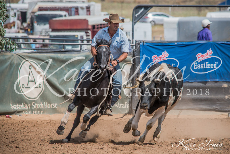 ASHN Stallions-0011
