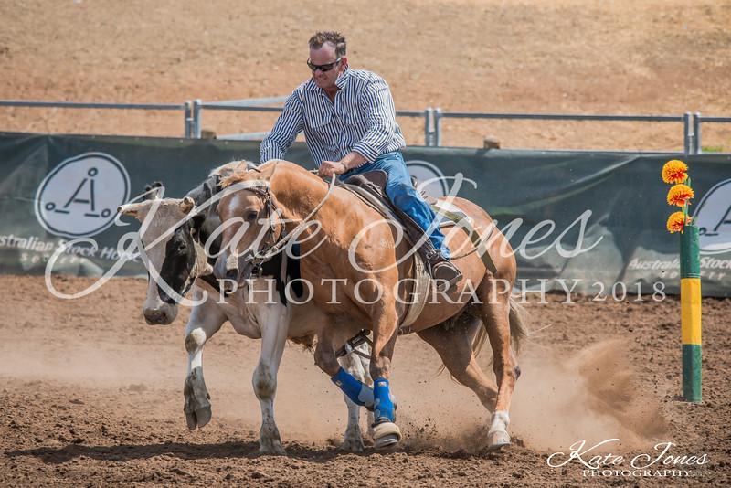ASHN Stallions-0078