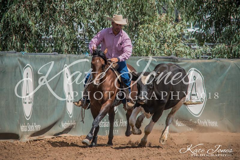 ASHN Stallions-0007